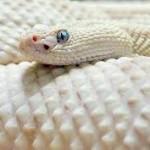 Profile picture of varuna